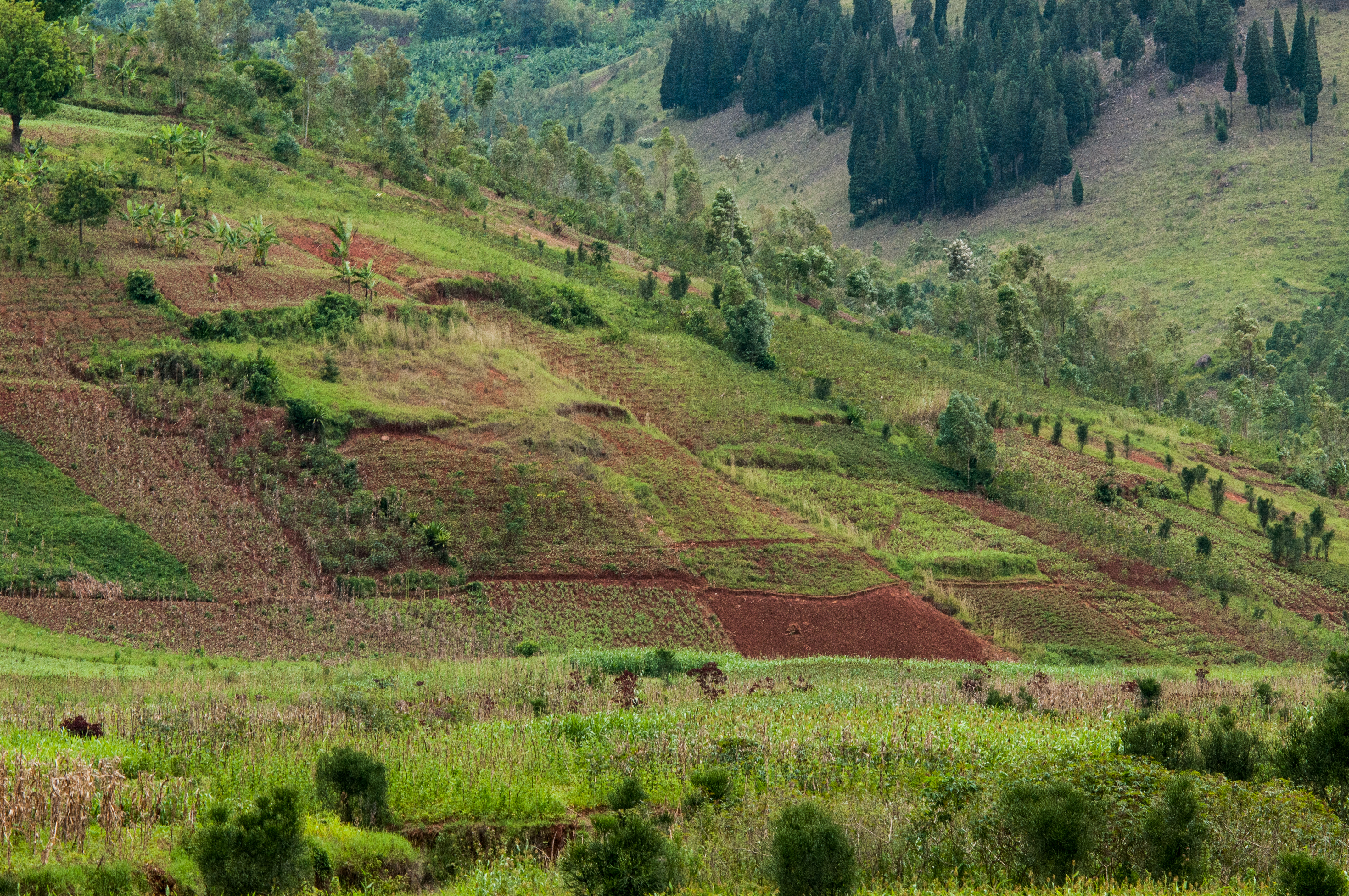 The AgroForest is an ideal combination of agriculture and productive trees.